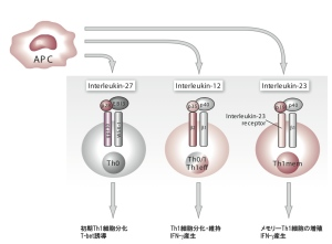 Cytokine_1